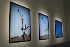 Biennale2011_044