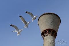 Venezia_140510_026_11_B_Daniele_Scarpa